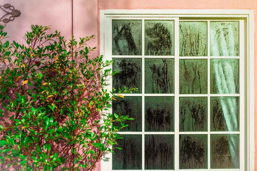 Glass door with condensation and a tree